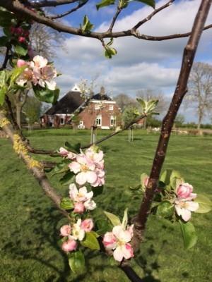 De fruitbomen staan volop in bloei