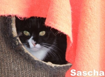 Sascha 3